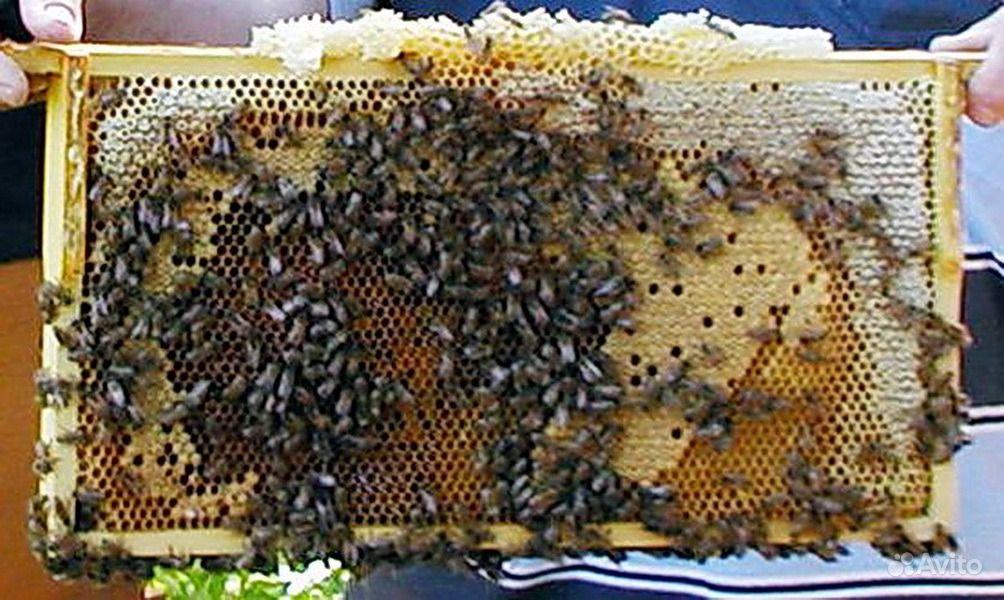 Как будто их вырезали и туда положили.но они не... сами соты с медом внутри рамки шестигранные.