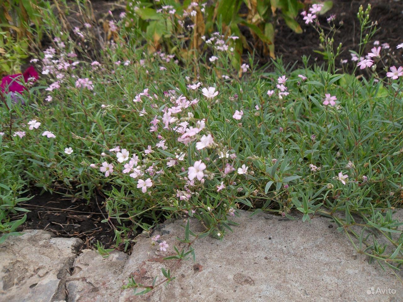 Цветущие растения для сада фото
