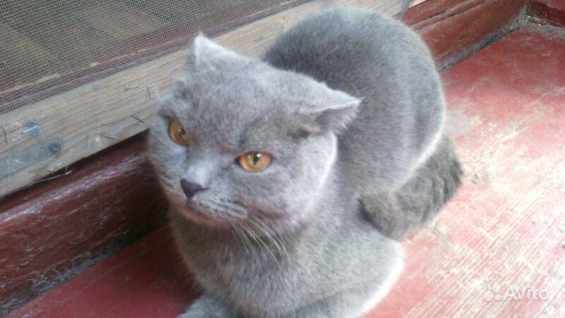 Кошки авито
