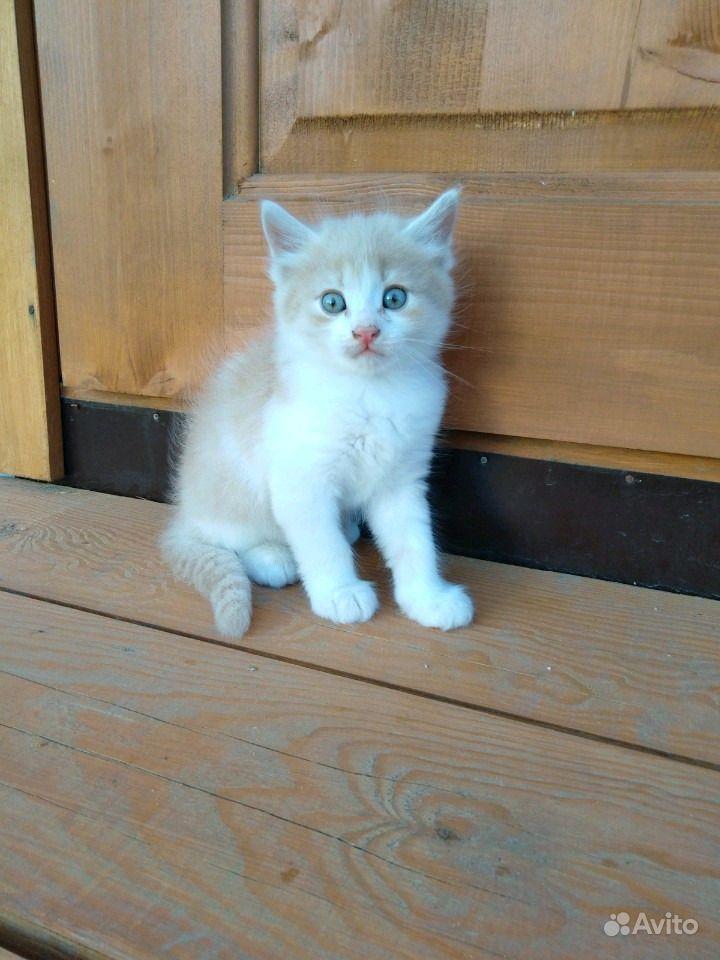 Отдам котят в Анапе - фотография № 1