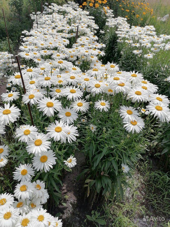 Растения купить на Зозу.ру - фотография № 3