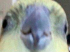 Фото попугайчика