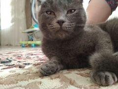 Кошка Вислоухие