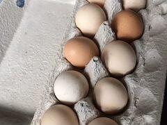 Яйца инкубационное