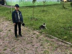 Сибирское хаски