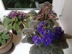 Цветы комнат