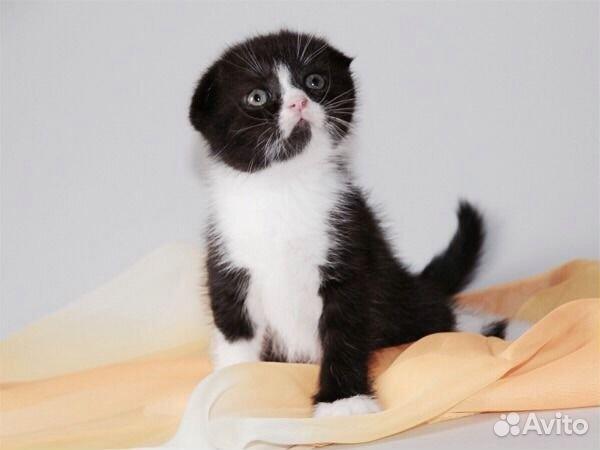 Кошки - Кошки в дар, котята в добрые руки