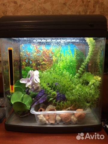 какой аквариум приобрести для начинающих