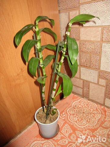 Липецк орхидеи купить
