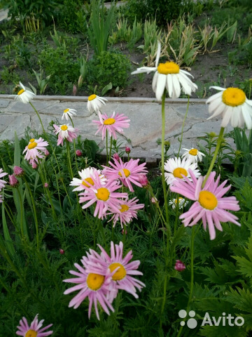 Цветы  89775052387 купить 5