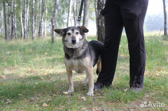 Маленькая собака Ласка ищет дом и маму купить на Зозу.ру - фотография № 6