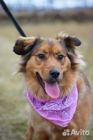 Собака в дар для семьи купить на Зозу.ру - фотография № 1