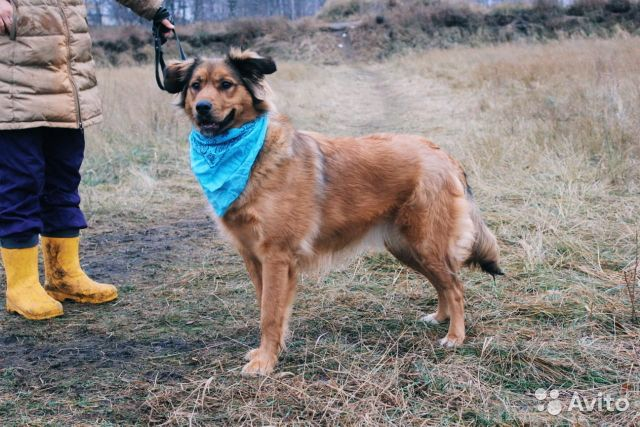 Собака из приюта в дар купить на Зозу.ру - фотография № 5