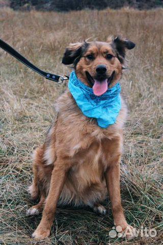 Собака из приюта в дар купить на Зозу.ру - фотография № 10