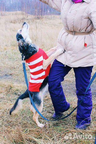 Собака ниже колена в дар купить на Зозу.ру - фотография № 6