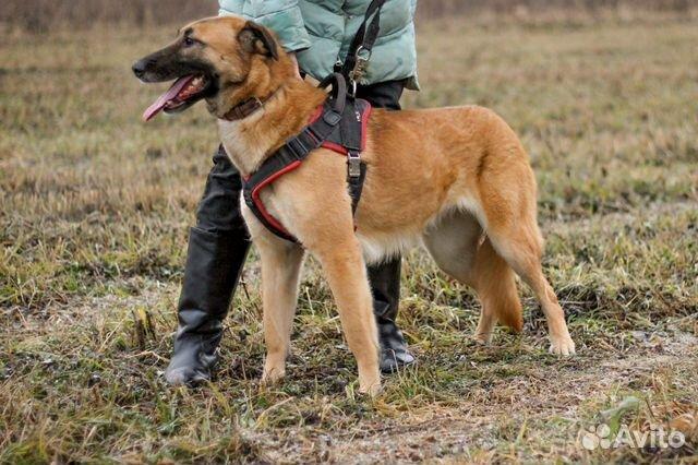 Собака в дар купить на Зозу.ру - фотография № 3
