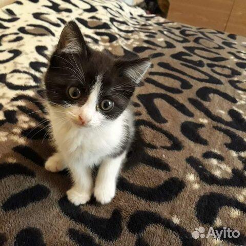 Отдам котенка  89101726190 купить 1