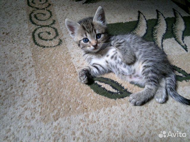 Котенок с голубыми глазами
