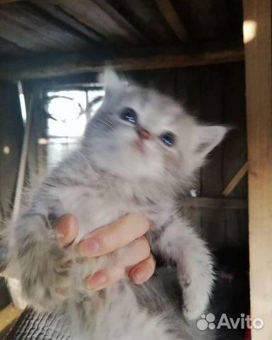 Отдам котят  89831703280 купить 1