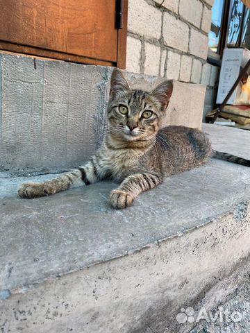 Котенка в добрые руки  89888757733 купить 1