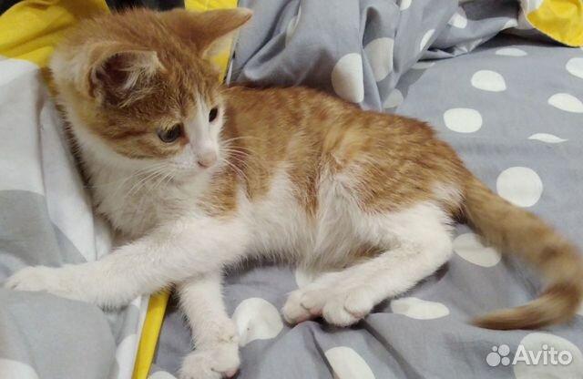 Котеночек 2 месяца в добрые руки  89656987636 купить 3
