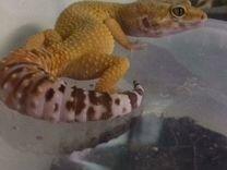 Террариумы, рептилии