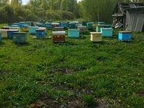 Продам мед с личной пасеки