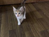 Отдадим В добрые руки 4 котёнка
