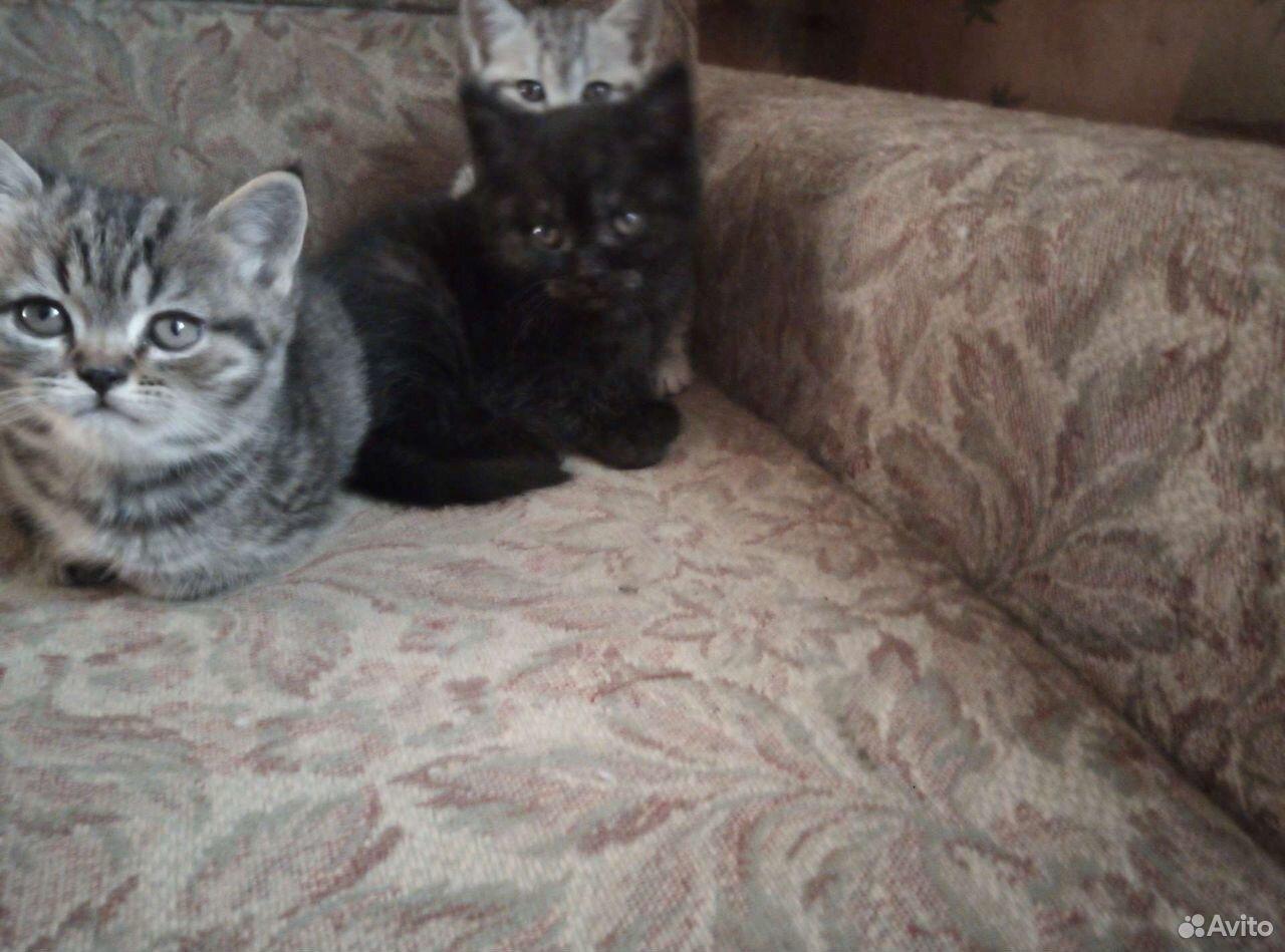 Кошка  89502432400 купить 2
