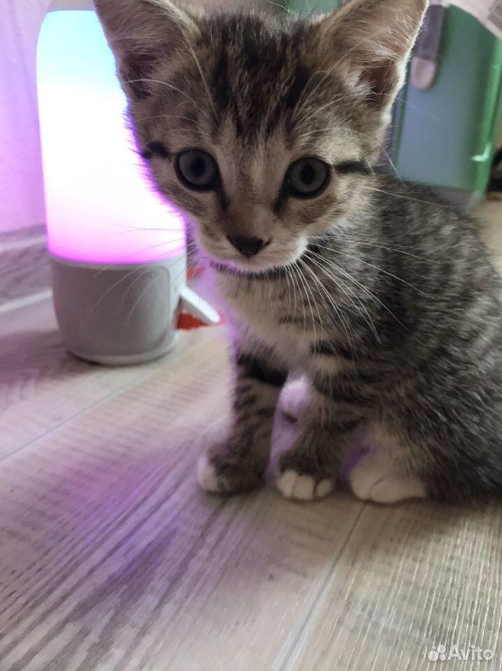 Отдам котят  89132857443 купить 4