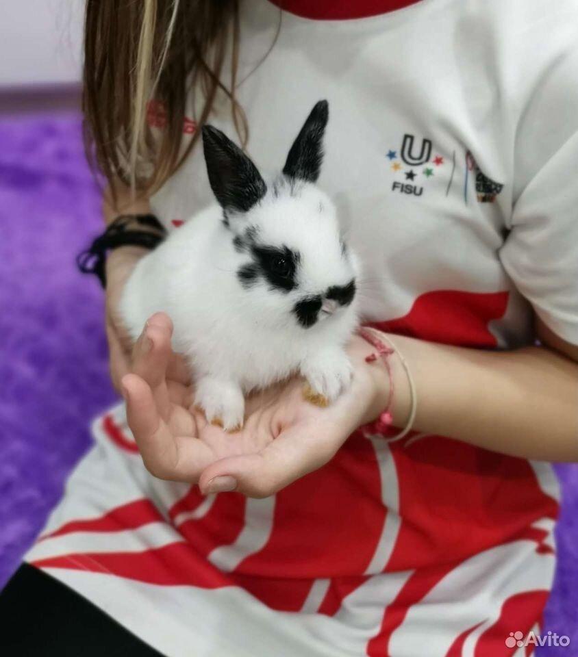 Кролик карликовый 1 мес и неделька