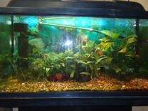 Аквариум Aquael pearl (Польша) 112 литров с Тумбой