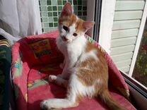 Белый&Рыжий котёнок