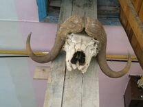 Голова — Охота и рыбалка в Геленджике