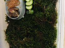 Яйца улитки Ахатин — Аквариум в Геленджике