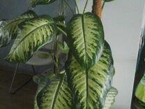 Красиво цветущие и декоративно лиственные отрадное
