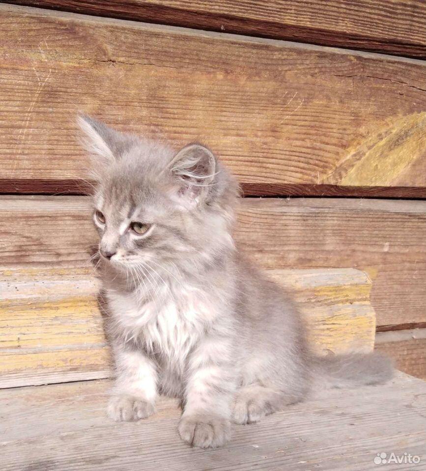 Котята  89125773660 купить 5