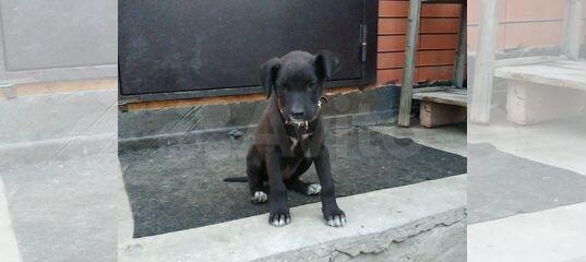 Собака купить в Ростовской области | Животные и зоотовары | Авито